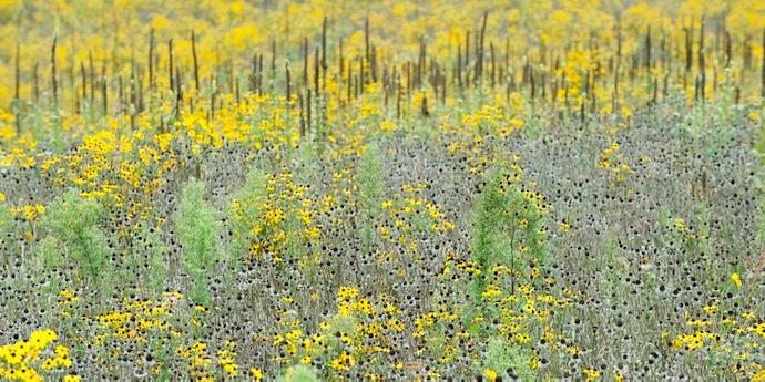 diverse LTER prairie