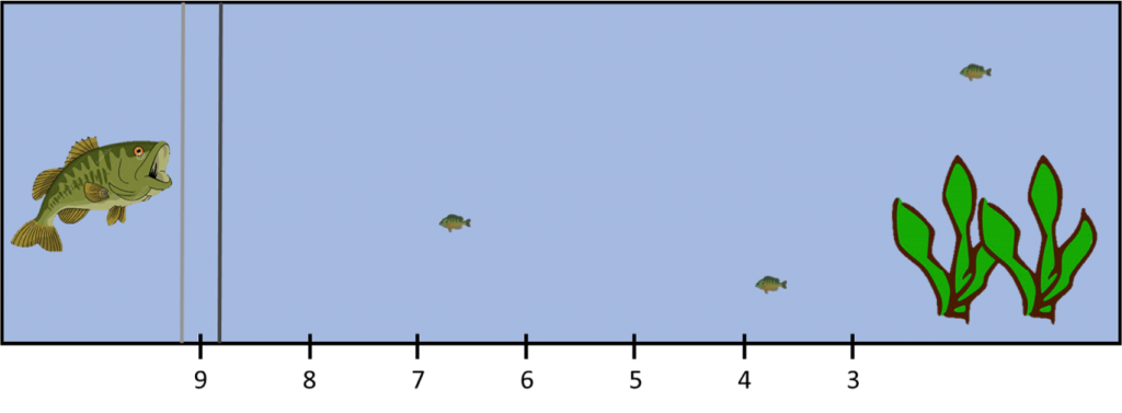 A view of the aquarium tank used to determine fish personality. A largemouth bass is placed to the left of the barrier, while 3 bluegill sunfish are placed to the right. If a sunfish swims out of the vegetation and eats a bloodworm dropped near the predator, it is considered bold.