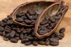 Cocoa beans used to make chocolate!