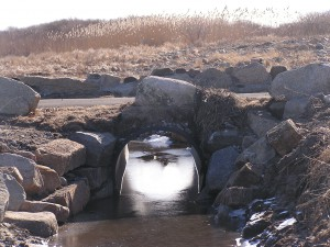 Culverts run under roads and allow water from the ocean to enter a marsh. Phragmites can be seen growing in the background.
