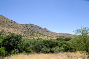 The Santa Rita foothills - habitat for the grasshopper mouse and scorpions