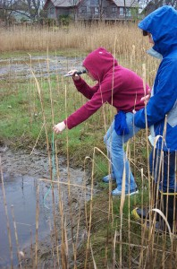 Students collecting salinity data at a transect point. The tall tan grass is Phragmites.