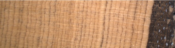 Growth rings from a Callitirs tree.