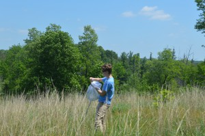 Scientist Paula catching blow flies in the field using an insect net.