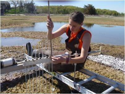 Researcher Sam Bond taking Sediment Elevation Table (SET) measurements in the marsh