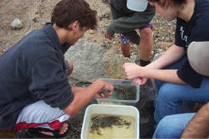 Students participating in Mass Audubon's Salt Marsh Science Project Count fish at Eastern Point Wildlife Sanctuary, Gloucester, MA