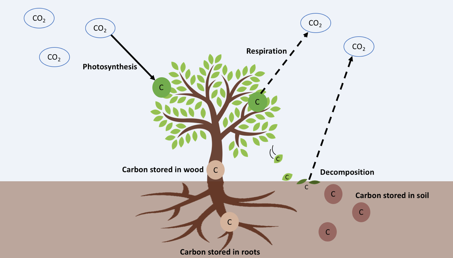 Tag  Photosynthesis