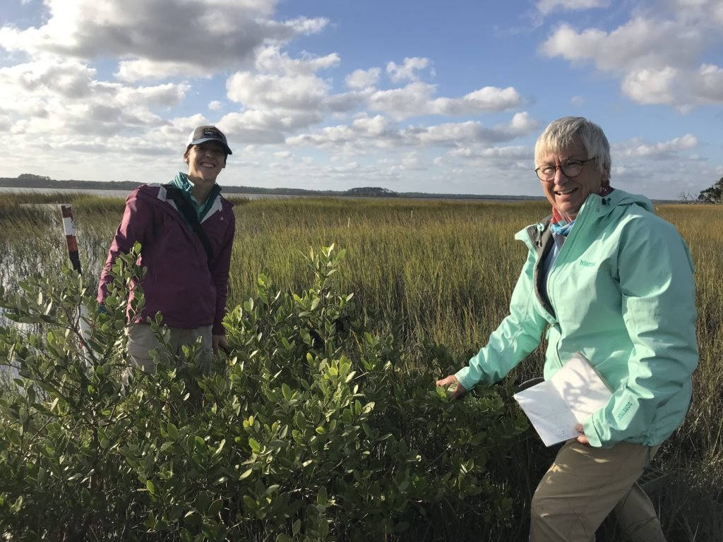 mangrove saltmarsh researchers