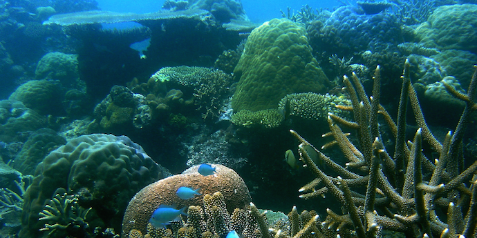 Coral bleaching and climate change